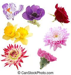selezione, fiori, isolato