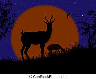 selvatico, coppia, gazzella, paesaggio, natura