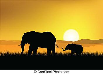 selvatico, elefante