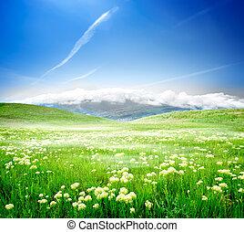 selvatico, fiori primaverili