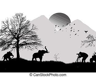 selvatico, fotografo, riprese, elefanti