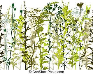 selvatico, piante, naturale, weeds.