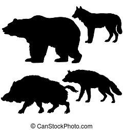selvatico, silhouette, orso, fondo, verro, lupo, iena, bianco