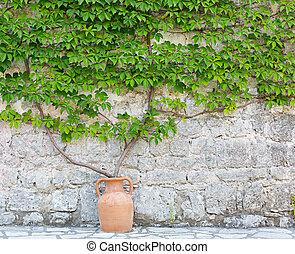 selvatico, uva, wall.
