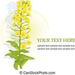 seme ravizzone, giallo, azzurramento