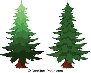 sempreverde, abete, due, albero