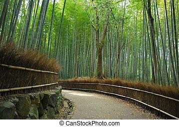 sereno, denso, boschetto, percorso, lungo, bambù