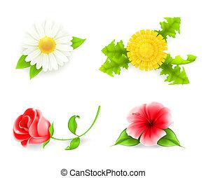 set, 10eps, fiori