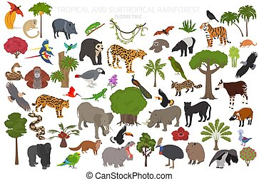 set, 3d, infographic., foresta pluviale, tropicale, naturale, australiano, regione, biome, uccelli, disegno, subtropicale, africano, vegetations, ecosistema, isometrico, amazonian, rainforests., animali, asiatico