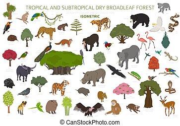 set, 3d, infographic., tropicale, stagionale, naturale, regione, biome, uccelli, disegno, subtropicale, asciutto, vegetations, ecosistema, forests., isometrico, foresta, animali, broadleaf