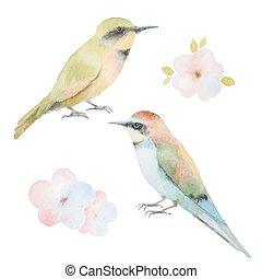 set, acquarello, flowers., uccelli
