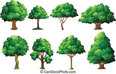 set, albero