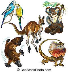 set, animali, australiano
