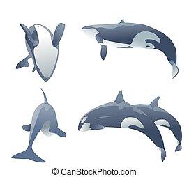 set, balene, assassino, illustrazione, vettore, white., saltare