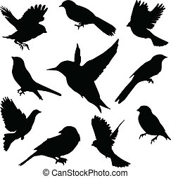 set, birds., vettore
