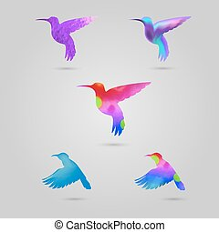 set, colorato, colibri