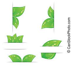 set, foglie, etichette, -, isolato, illustrazione, ecologico, vettore, sfondo verde, bianco