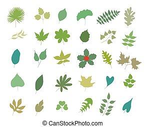 set, foglie, illustrazione, vettore, vario, white., tipi