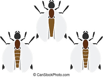 set, insetti