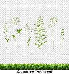 set, isolato, sfondo verde, erba, trasparente