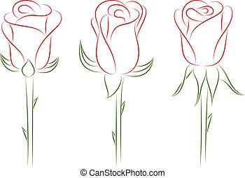 set, roses., illustration., vettore