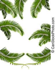 set, sfondi, leaves., illustrazione, vettore, palma