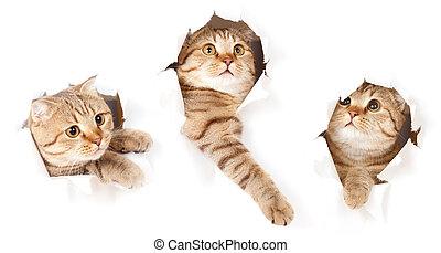 set, strappato, isolato, gatto, carta, buco, uno, lato