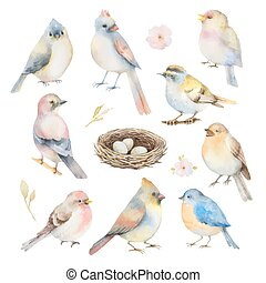 set, vettore, acquarello, birds.