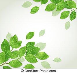 sfondo verde, ramo