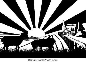 sheep, campo, concetto