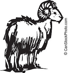 sheep, corno grande