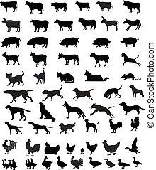 silhouette, animali, animali domestici