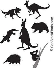 silhouette, animali, australiano