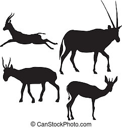silhouette, antilopi