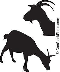 silhouette, capre