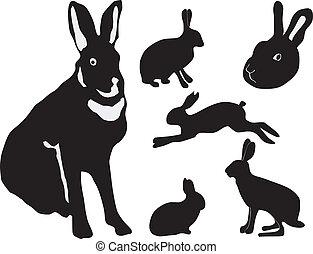 silhouette, conigli