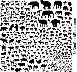 silhouette, fauna, asia
