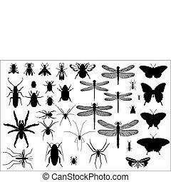 silhouette, insetti, ragni