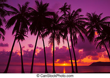silhouette, isola, albero, tropicale, palma, tailandia, tramonto