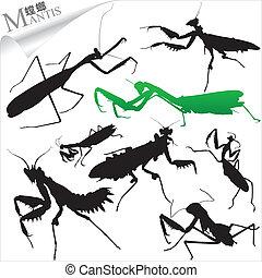 silhouette, mantide, insetti, -