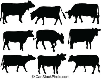 silhouette, mucca