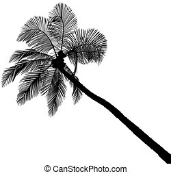 silhouette, palma
