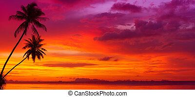 silhouette, panorama, sopra, albero, oceano, tropicale, tramonto, palma