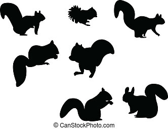 silhouette, scoiattolo