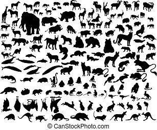 silhouette, serie animale