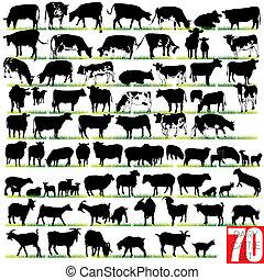 silhouette, set, mucca da latte