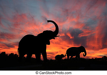 silhouette, tramonto, elefanti