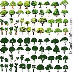 silhoutte, albero