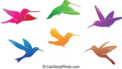 simboli, colibrì