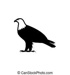simbolo, segno, icona, aquila, isolato, vettore, illustrazione